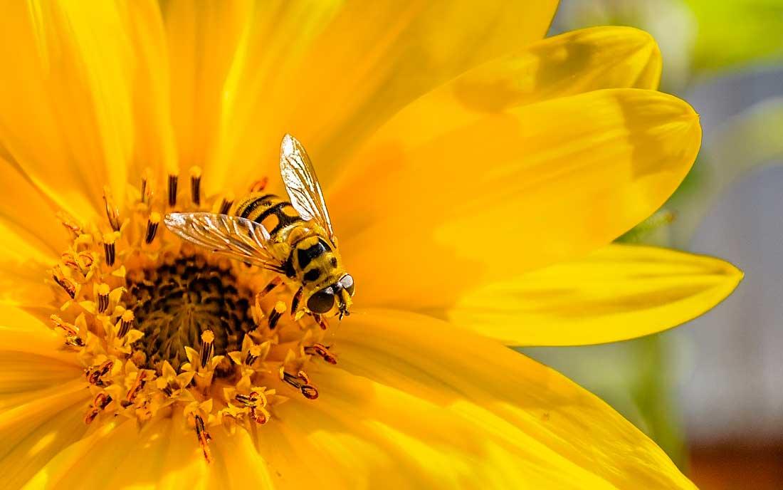 La jalea real ayuda en la astenia primaveral