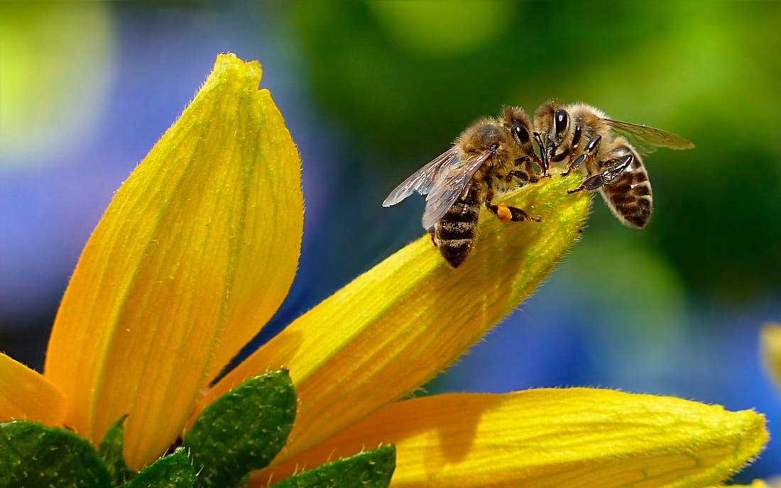 La jalea real, ayuda natural para la astenia primaveral